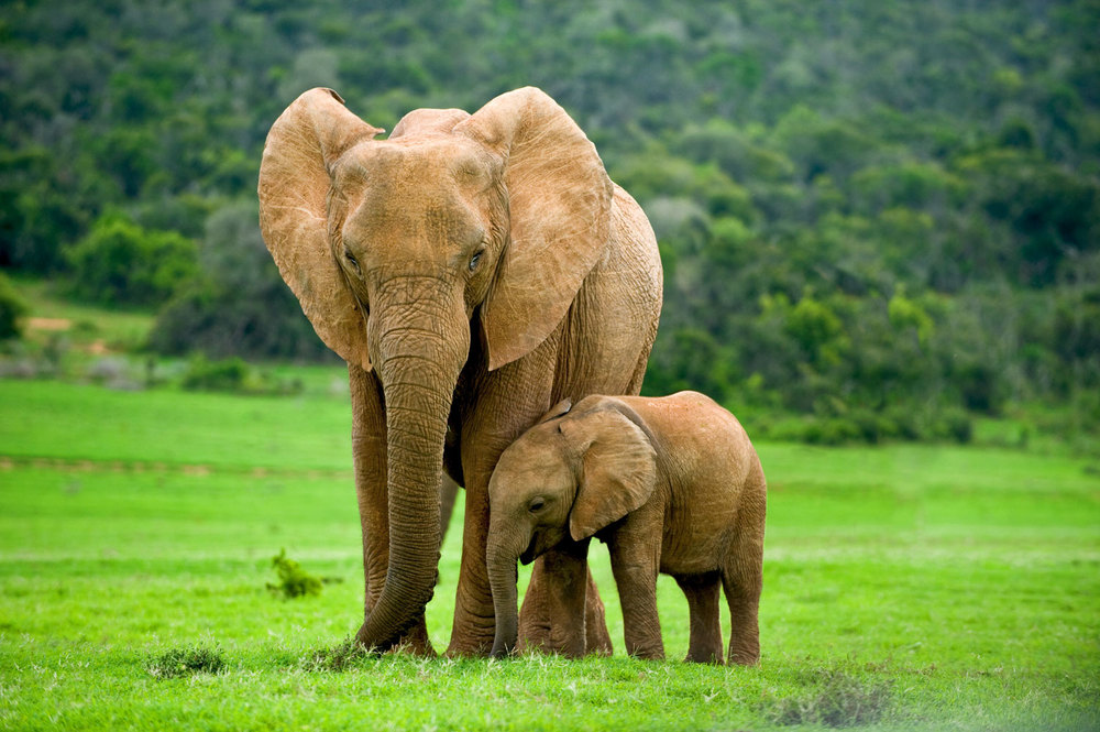 Web-Africa-Elephants-sm.jpg