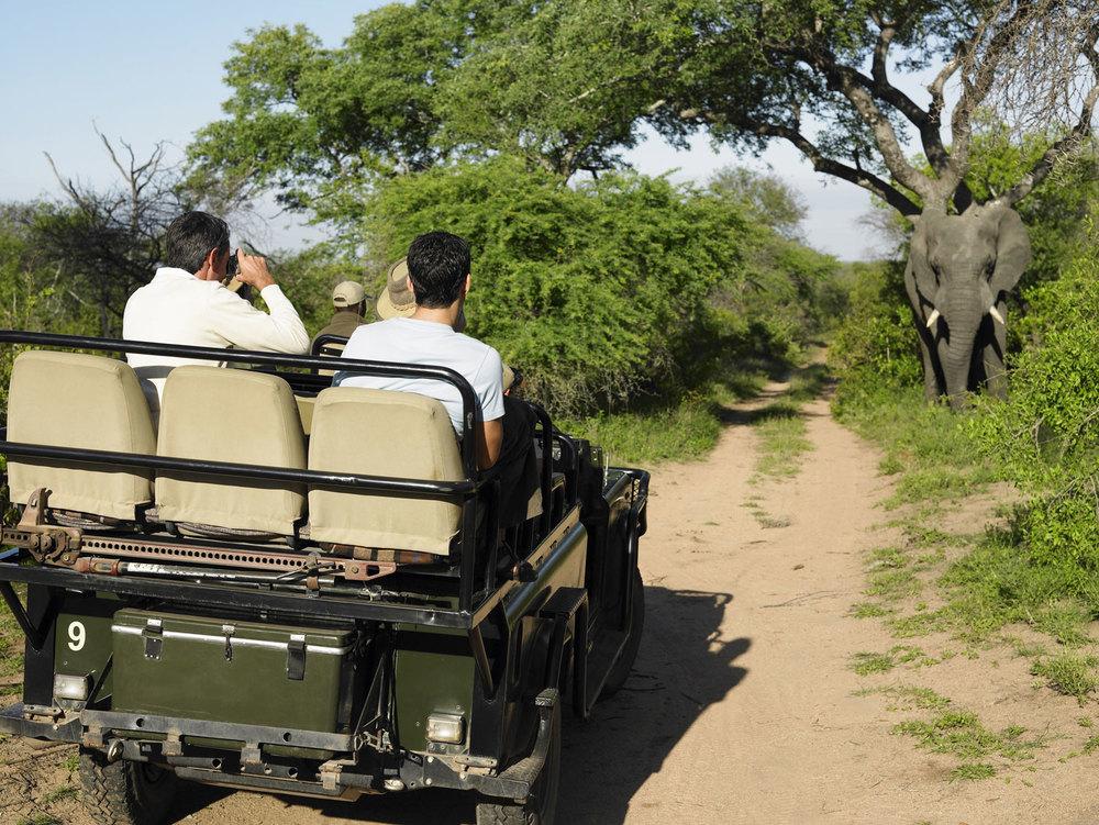 Web-Africa-Game-Drive-sm.jpg