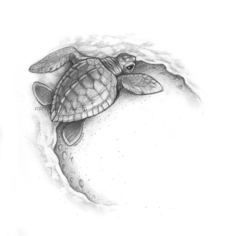 turtleBeachCircle_72.jpg
