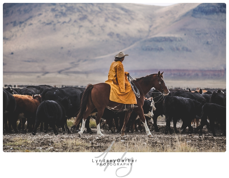 New Mexico, Cowboy, Ranch, Weaning, Photography, Photographer