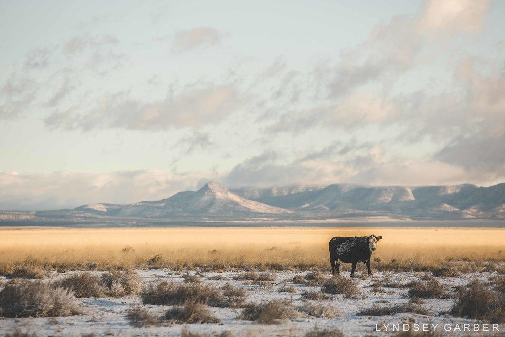 Cowboy Photography, Ranch Life, American Cowboy - Lyndsey Garber Photography