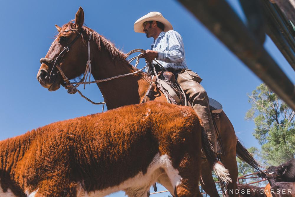 Cowboy Photography Branding Calves