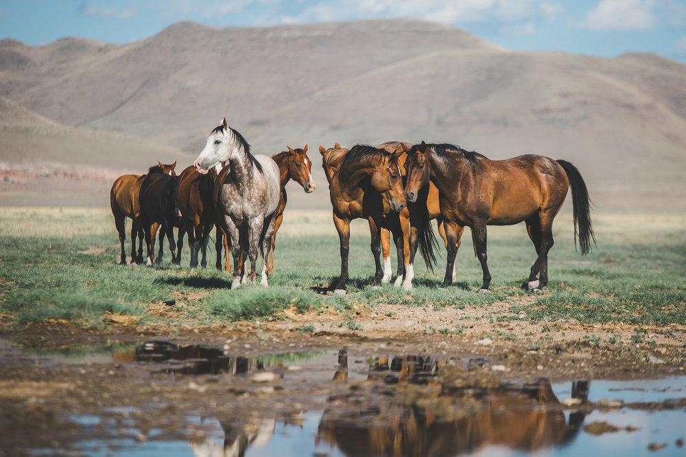 horses-9900.jpg