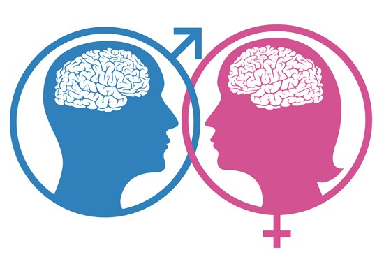 female-male-brain-differences.jpg