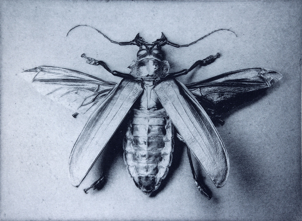I worked a lot with insects making photographs, drawings and prints. This was a photo made in 2004 of Titanus giganteus, a large and beautiful beetle that was then in Bob Natalini's collection.
