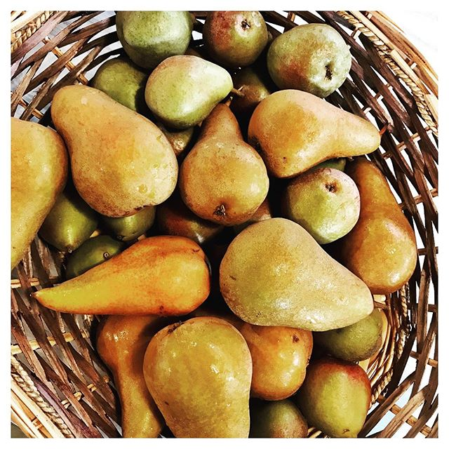 Autumn Stirs Incredible Colors in The Catskills! #farmersmarket #sullivancounty #pears #sullivancatskills #catskillsliving #countrygirllife #countrydrive #inthewoods #inthecountry #forestburgh #forestburghgeneral #catskills #catskillsny #catskillstyle
