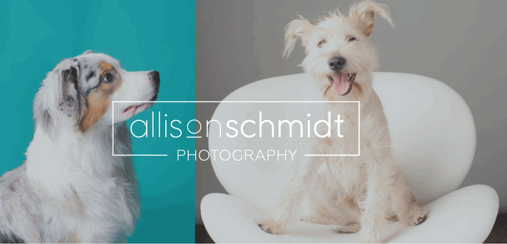 Allison Schmidt Branding and Squarespace design on Little Dot Creative