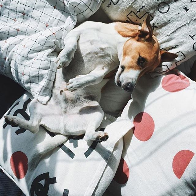 How cute is Monsieur Marcel from @vieillebranche enjoying the sunshine and these cool pillows.  @neverknow_bali pillows found online at www.ciaomrhal.com ✌🏼️ Happy Sunday xxxx
