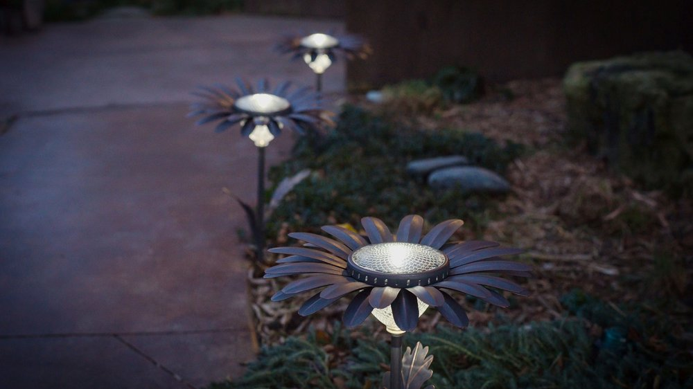 daisy_path_light-16.jpg