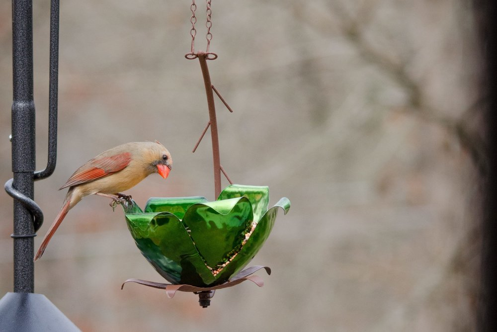 Tulip Tree Bird Feeder