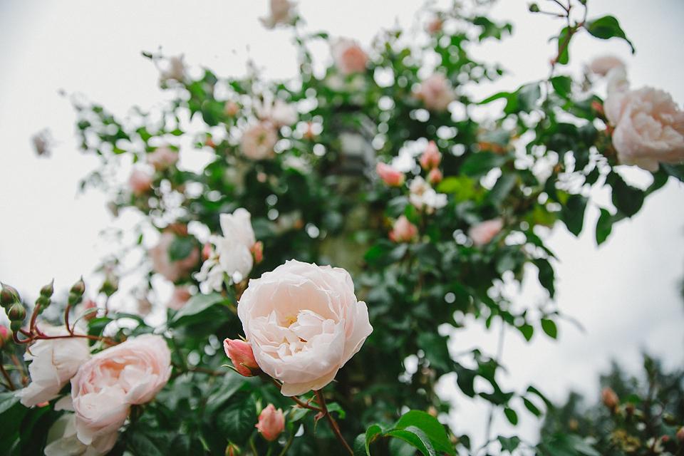 Rose Ladder