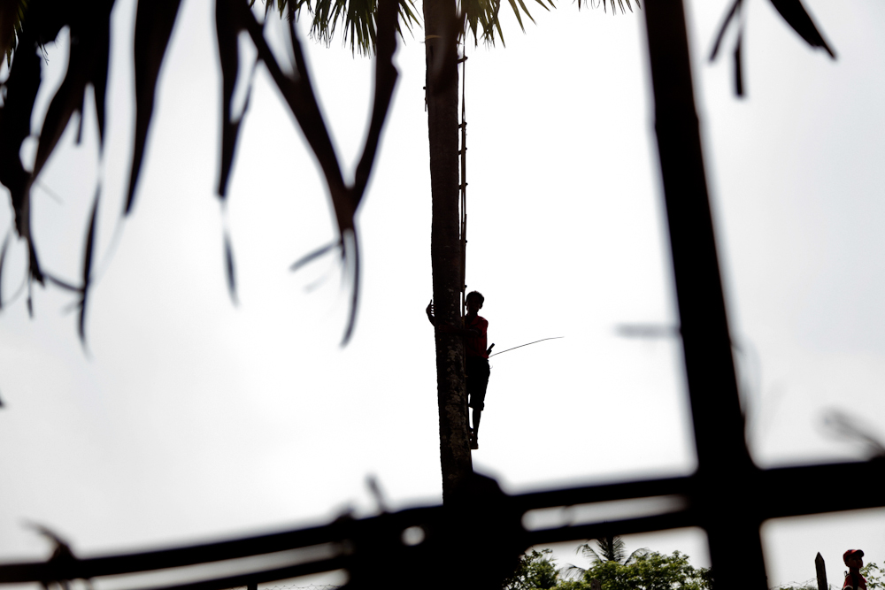 Climbing up the palm tree in Dala township, south of Yangon river, March 2013.