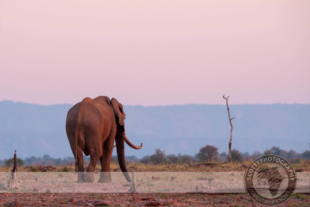 Elephant-5649.jpg