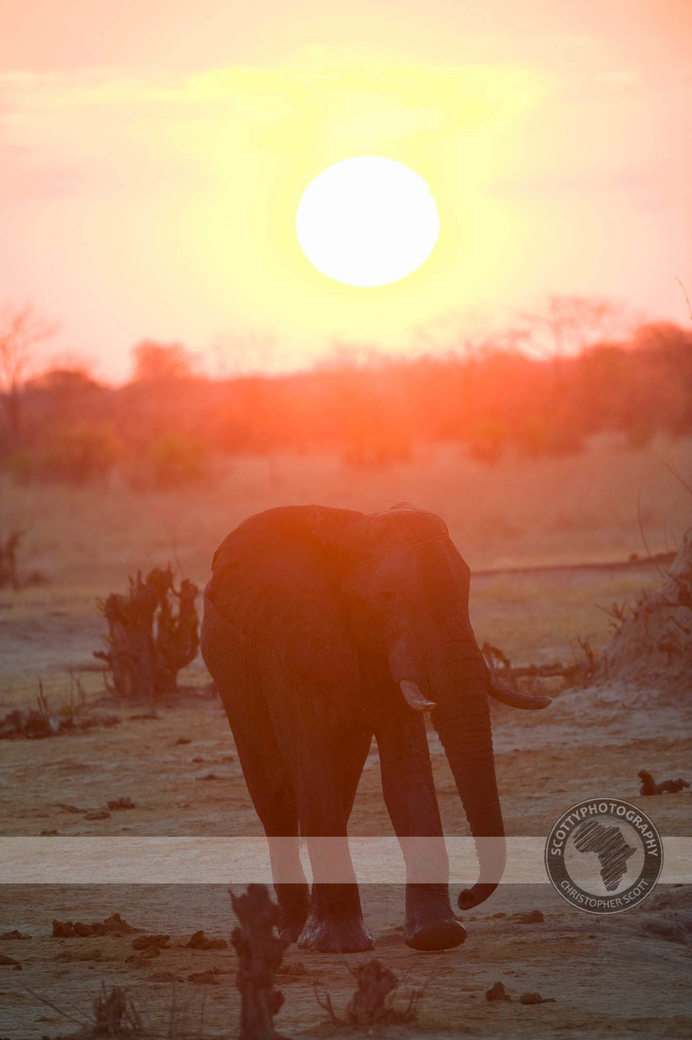 Elephant2443.jpg