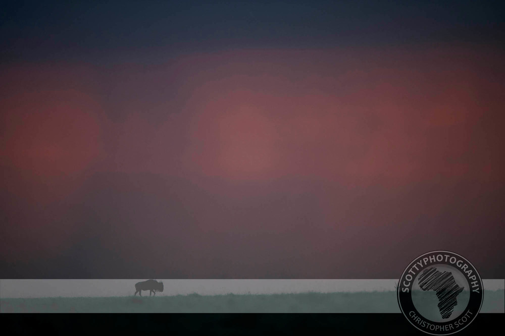 Wildebeest0238.jpg