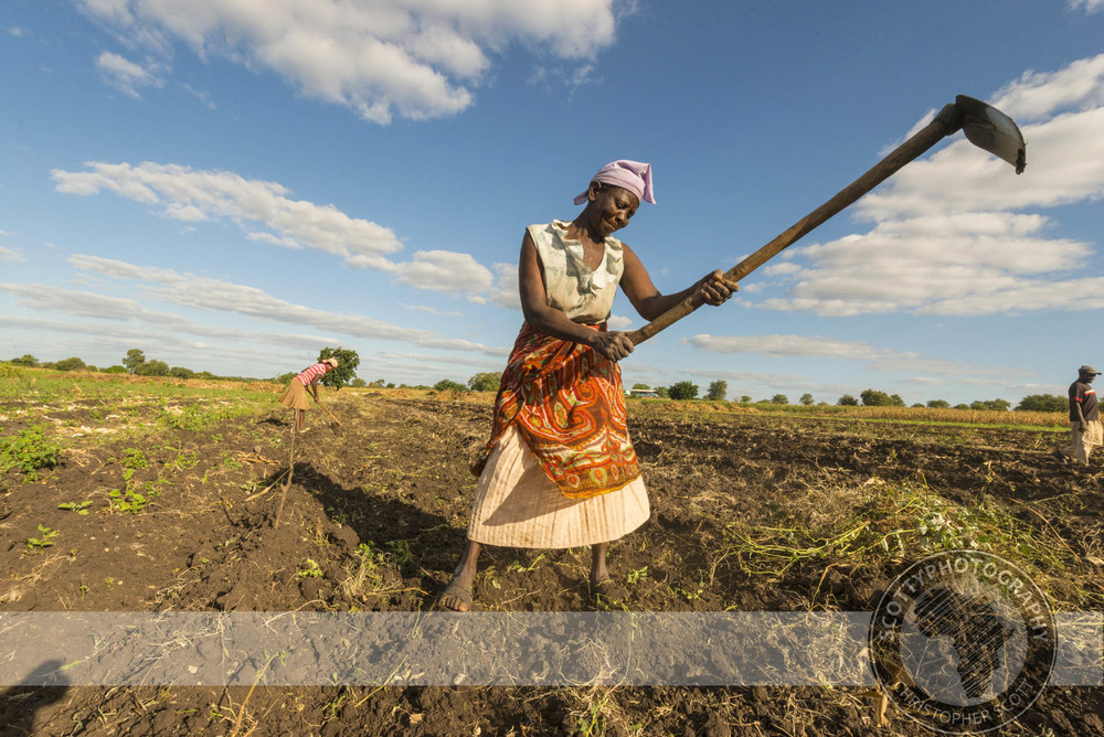 Tongaat Hulett Zimbabwe004.jpg
