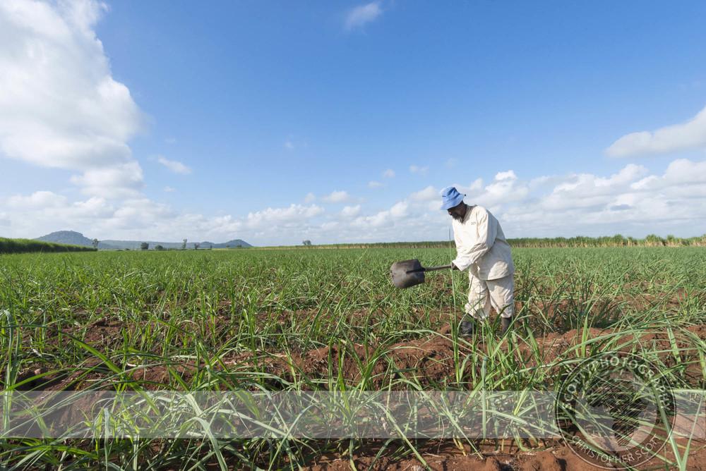 Tongaat Hulett Zimbabwe007.jpg