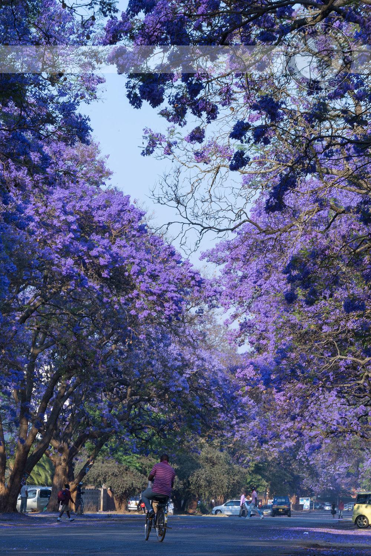Harare-1499 copy.jpg