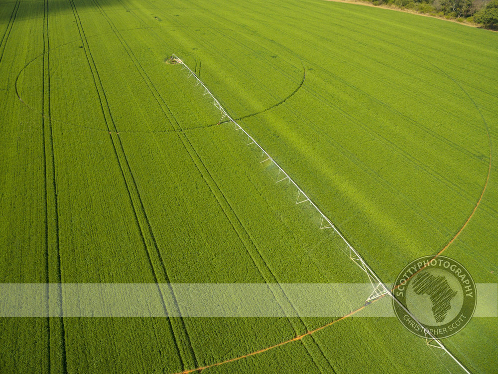 SeedCo aerial (17).jpg