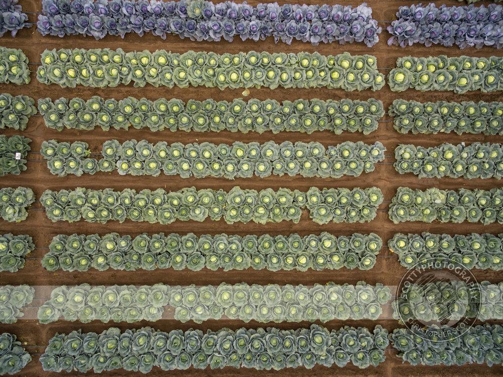 Prime Seeds (18).jpg