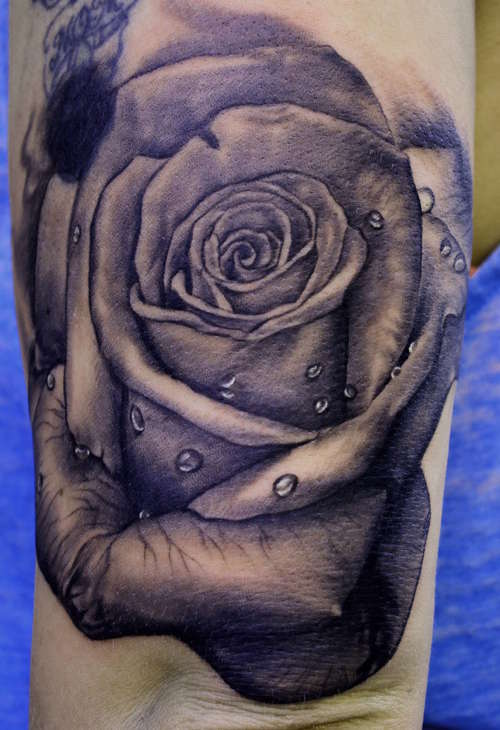 roseweb2.jpg