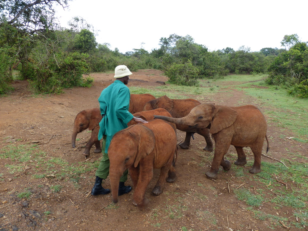 baby elephants + keeper.JPG