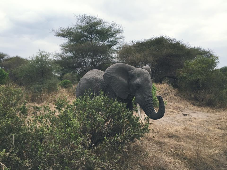 SC elephant 1.jpg