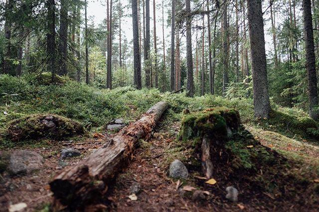 Nuuksio trail #fujifilmxt2