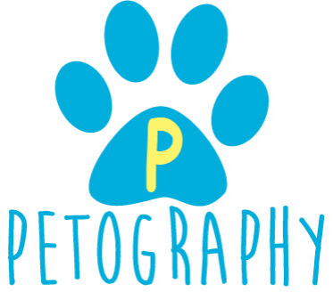 Chicago Pet Photographer