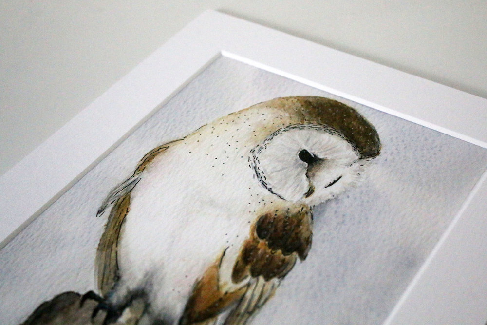 Barn owl 4.jpg