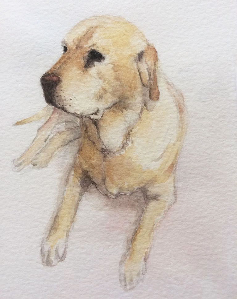 Pet Portrait 5.jpg