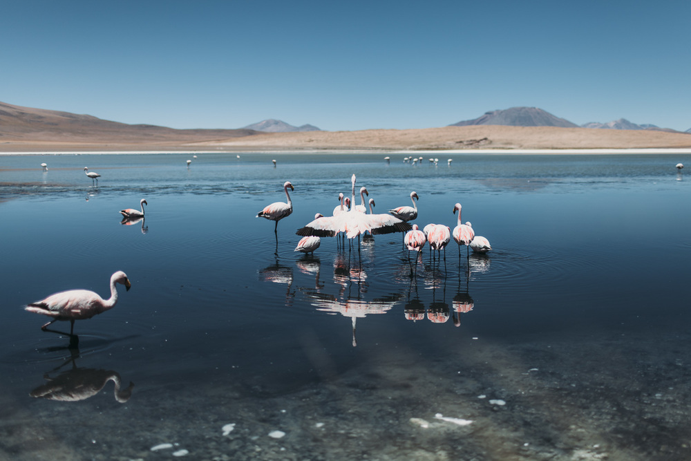 Evabloem-Salar-de-Uyuni_Bolivia-0092.jpg