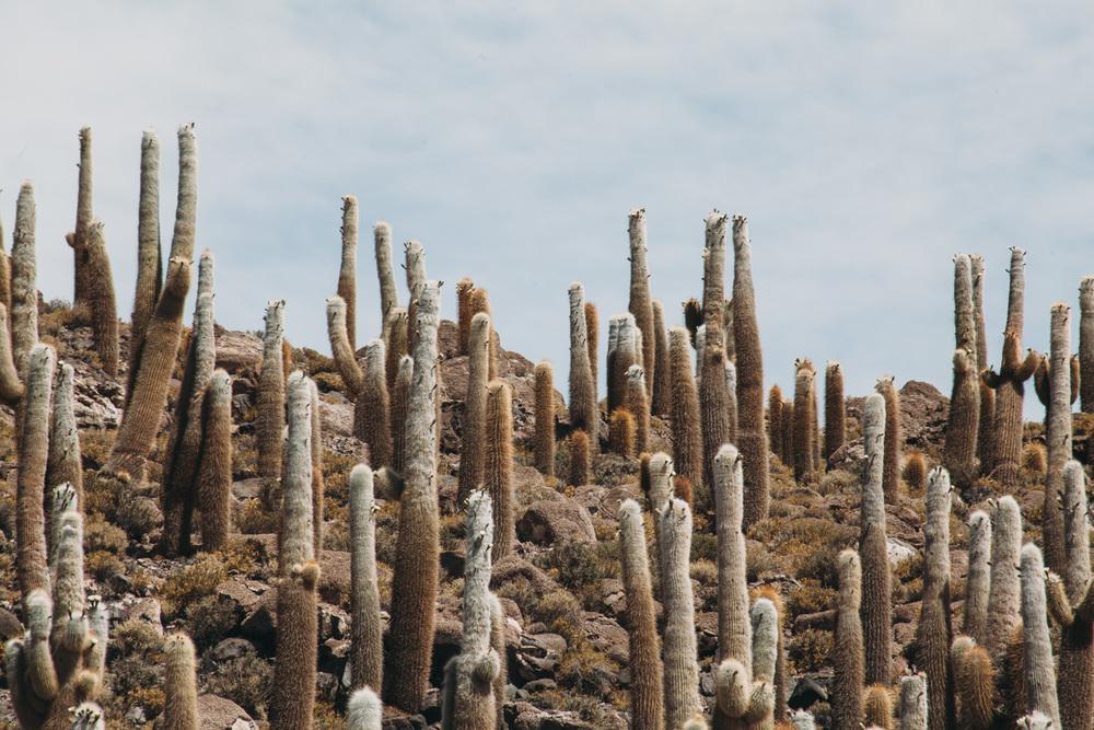 Evabloem-Salar-de-Uyuni_Bolivia-0036.jpg
