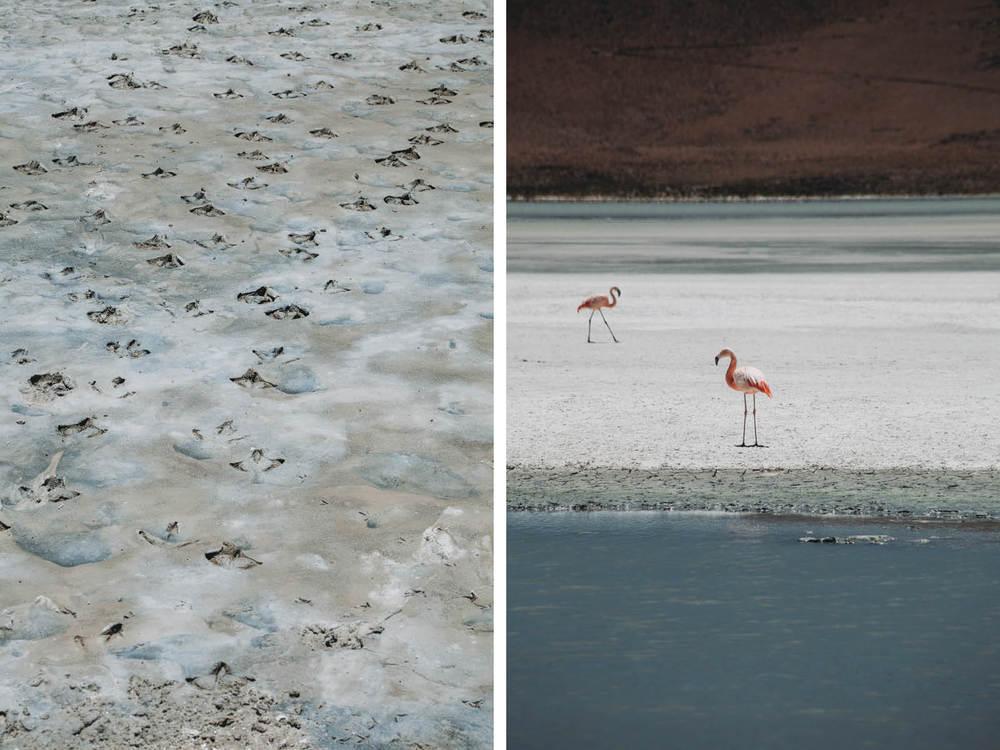 Evabloem-Salar-de-Uyuni_Bolivia-000115.jpg