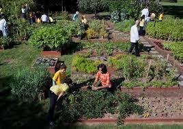 urban agriculture.jpeg