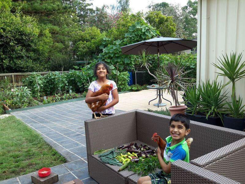 Prisha and Pranit, kids of Pratul Singh, with their chooks, and freshly harvested organic veggies in their backyard          Source Priyanka Singh.JPG