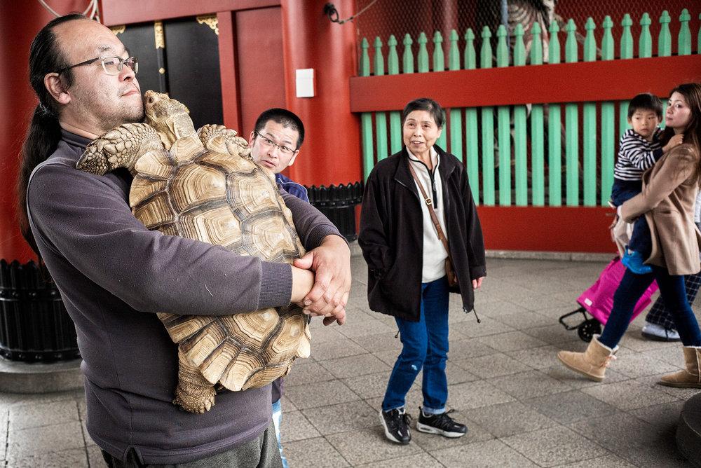 giant-tortoise-in-tokyo2500.jpg