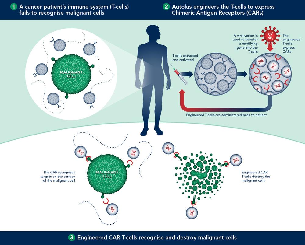 car t cell immunotherapy diagram headaround infodesign studio