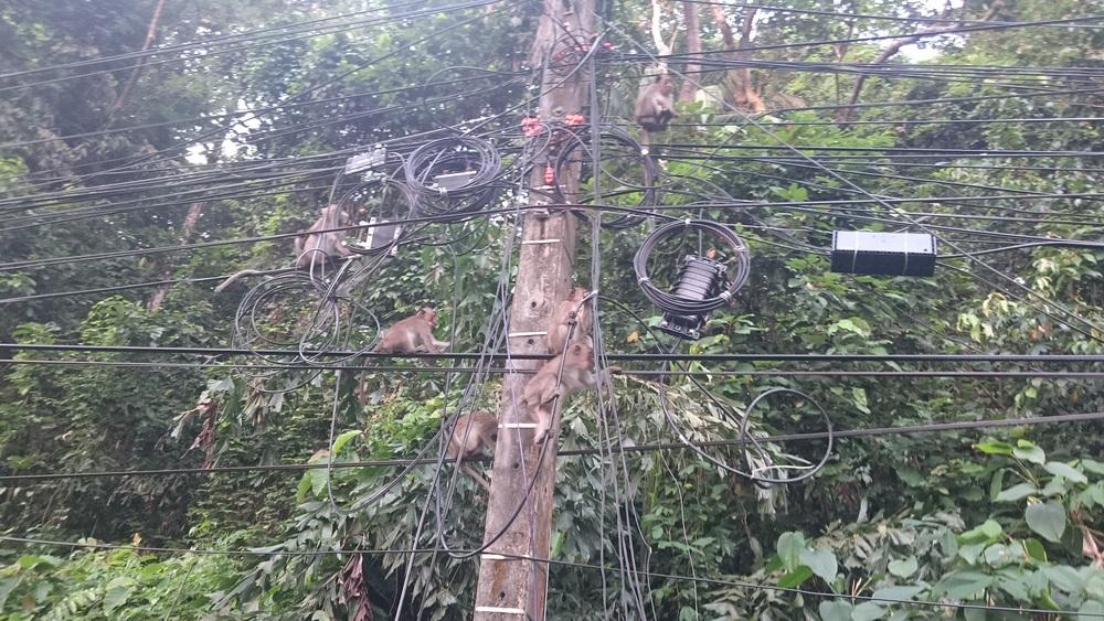Auf der Insel Koh Chang nahmen einige Affen den Strommast regelrecht ein...:-)