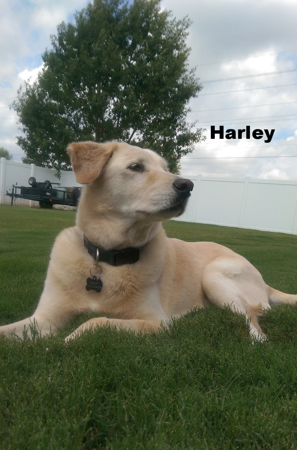 Harley 3rd.jpg
