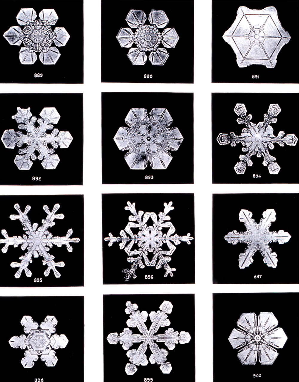 """Under the microscope, I found that snowflakes were miracles of beauty; and it seemed a shame that this beauty should not be seen and appreciated by others. Every crystal was a masterpiece of design and no one design was ever repeated., When a snowflake melted, that design was forever lost. Just that much beauty was gone, without leaving any record behind."" -- Wilson Bentley (1925)"