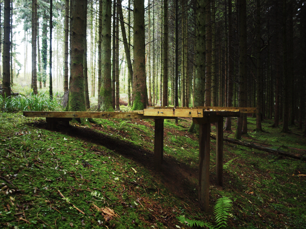 Platform in the forest