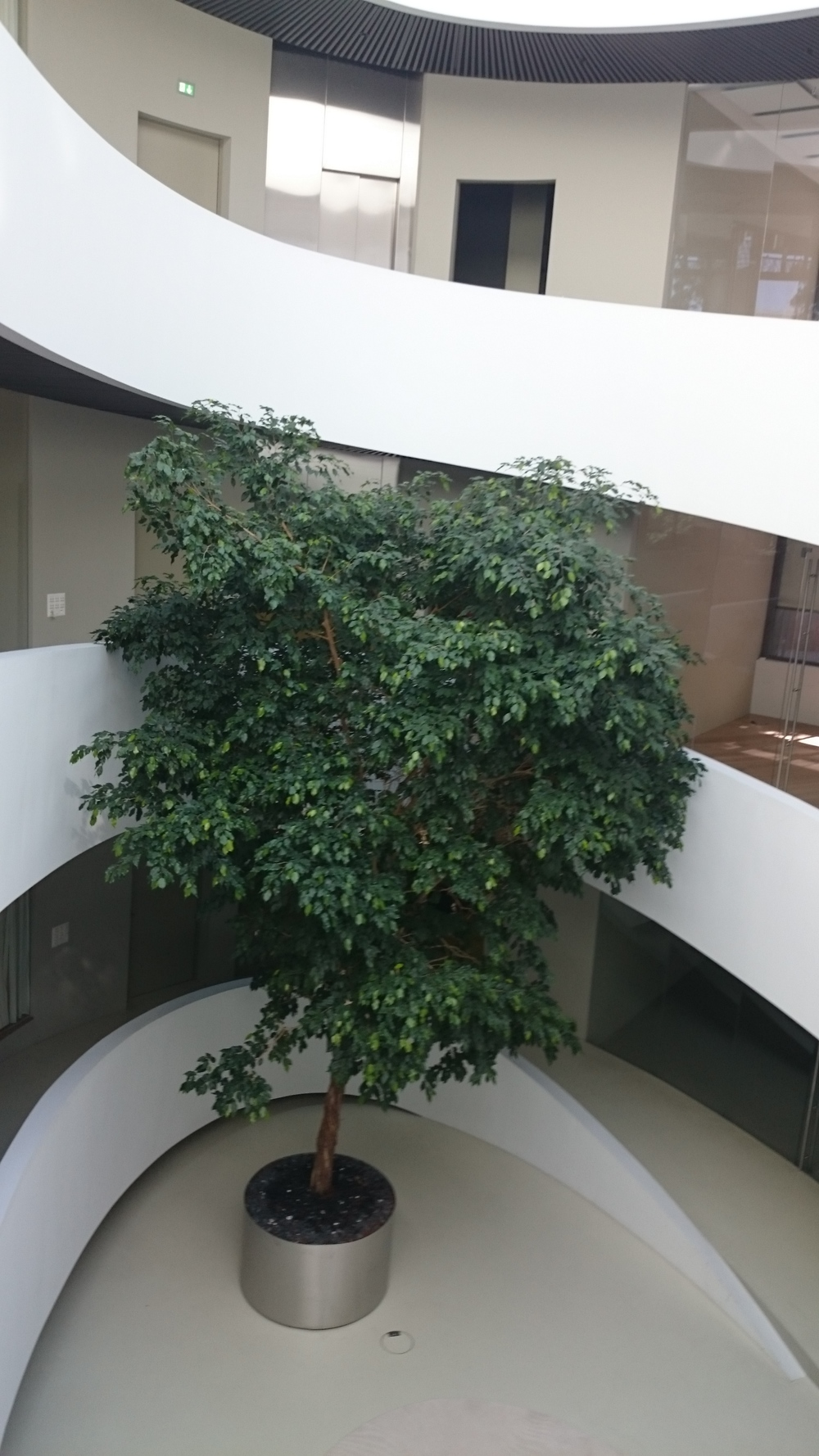 Roger Federer donated this tree for this office building