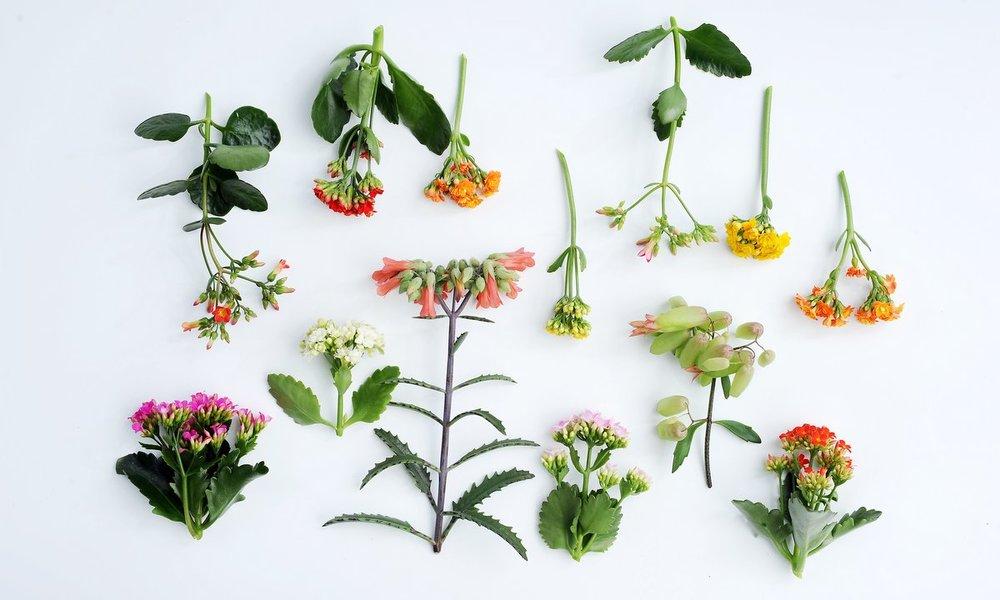 Beeld: mooiwatplantendoen