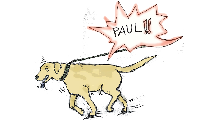Hund zieht an Leine