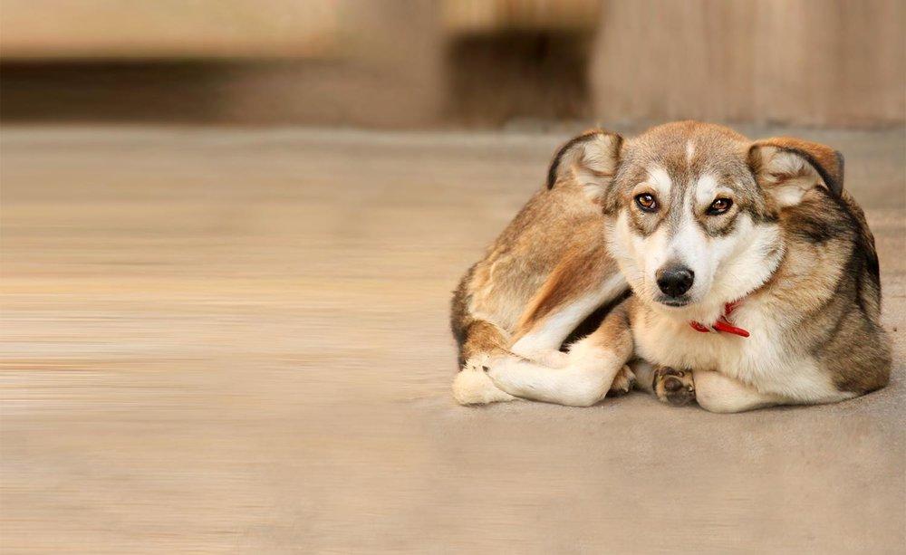 Kaufberatung - ..... weil sie Tier (!) und Mensch so viel Stress ersparen könnte, und doch so selten in Anspruch genommen wird .....