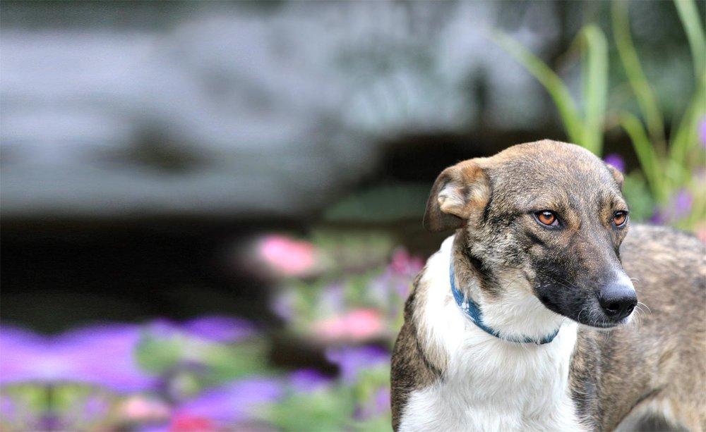 Grunderziehung - Das kleine und große 1 x 1 für jeden (Stadt-) Hund.