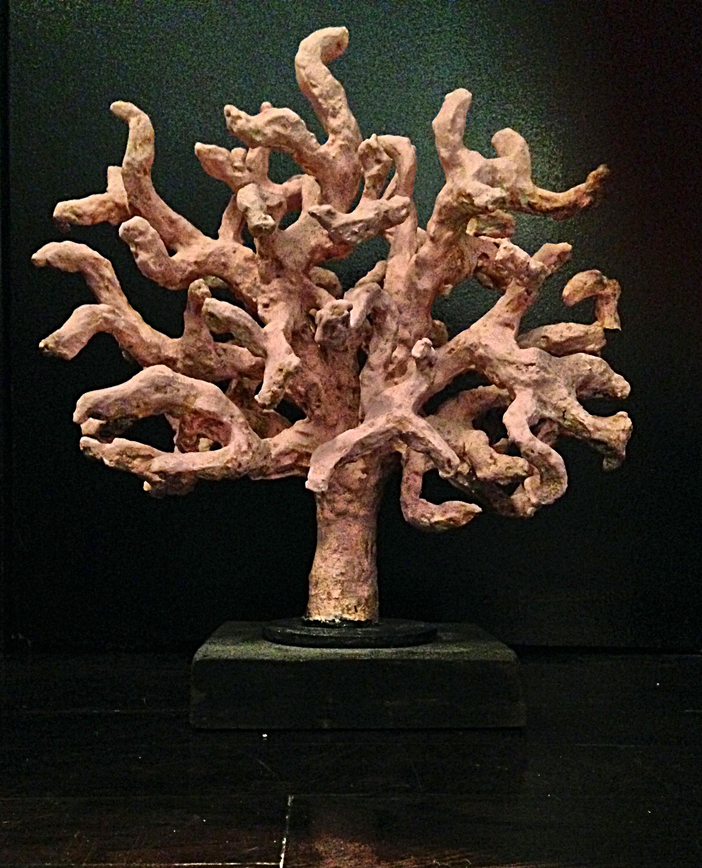 Coral Tree_Fotor