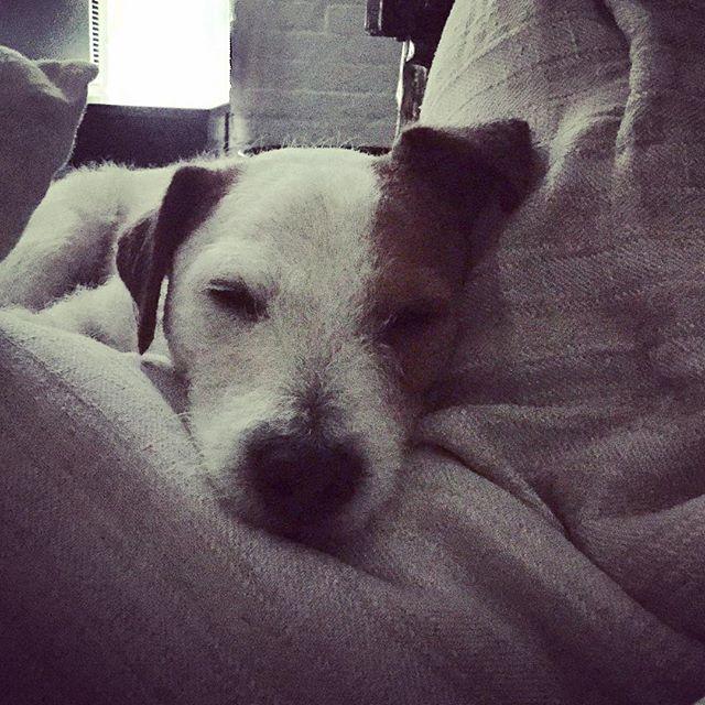WEEKENDS #monday #country #weekends #dog #games #leaderofthepack #popular #pooch #love #turner #smooch #scruff #sleeping #beast #newyork
