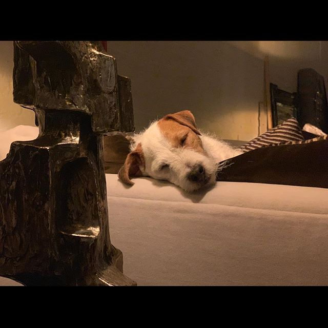 MONDAY #home #holidays #rain #cozy #sleepy #happy #angel #fun @tribecapetservices #love #dogs #animals #peace #goodnight